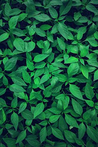 green close-up photography of green leafed plant flora