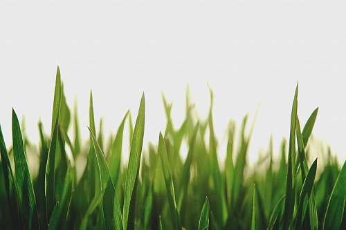 green closeup photography of green grassfield grass