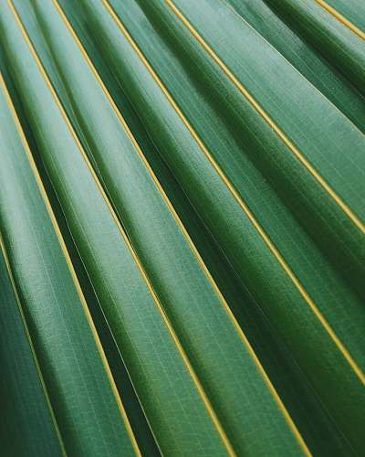 green coconut leaf texture