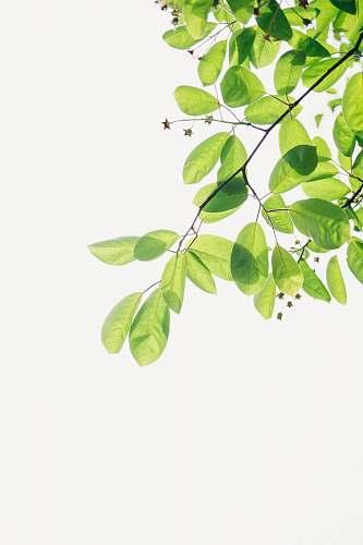 green green flowering plant leaf