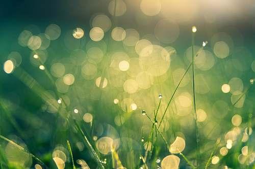 green green grasses grass
