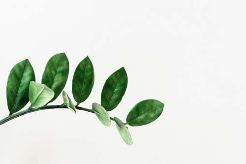 green green leafed plant clip art leaf