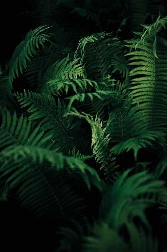 fern green leafed plant green