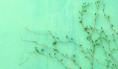 green green-leafed plant grass