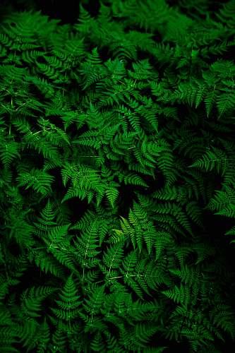 fern photo of green fern plant green