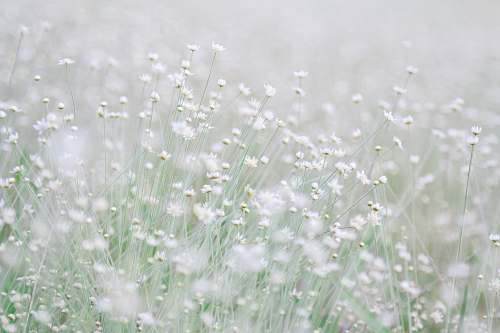grey photo of white flowers during daytime grass
