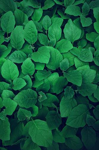 green photography of green leaves greenery