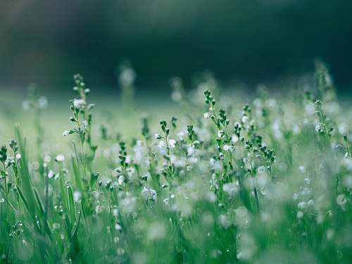 nature shallow focus photo of white flowers grass