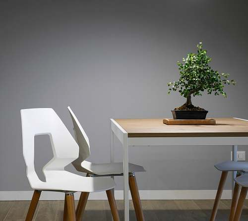photo bonsai white and brown wooden table and chair set furniture free for commercial use images