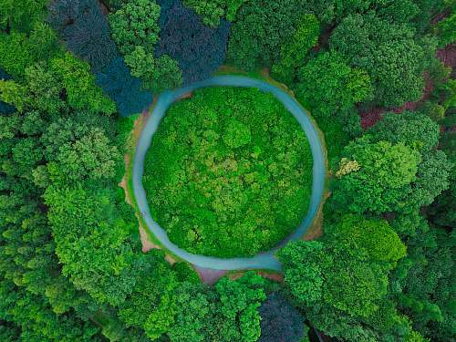 broccoli aerial photography of tall green trees at daytime produce