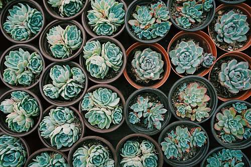 photo porcelain green succulent plants pottery free for commercial use images
