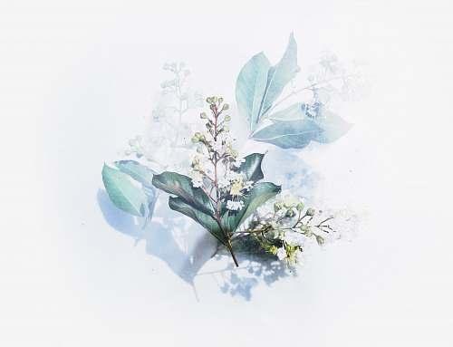flower white flowering plant artwork floral