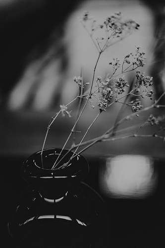 plant black and white floral textile ikebana
