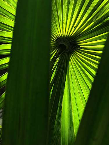 silhouette close-up of long-leafed plant arecaceae