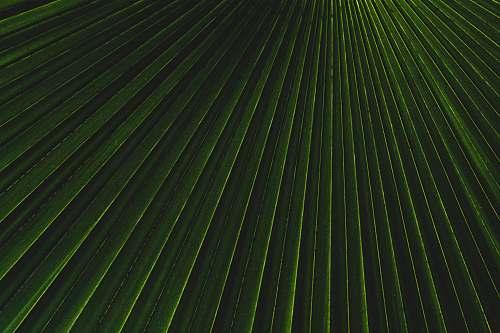 texture green and white stripe textile light