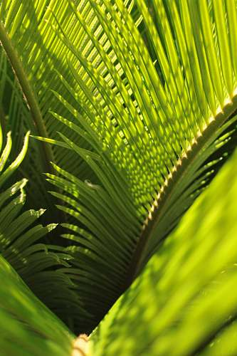 plant green coconut tree leaves leaf