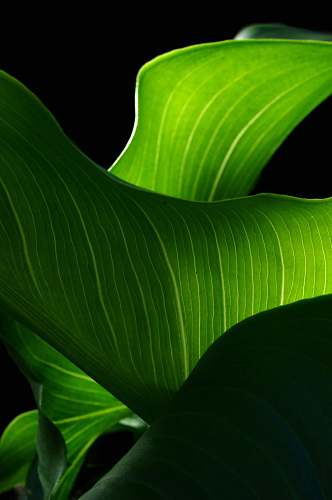 leaf green leaf plant