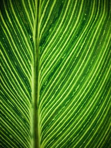 plant green leaf leaf