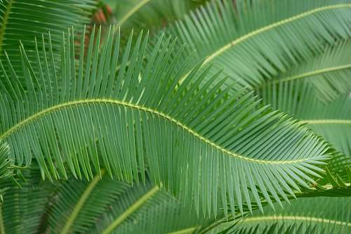 plant green-leafed palm leaf