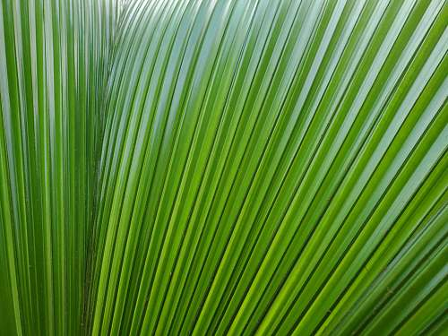 plant green leafed plant grass