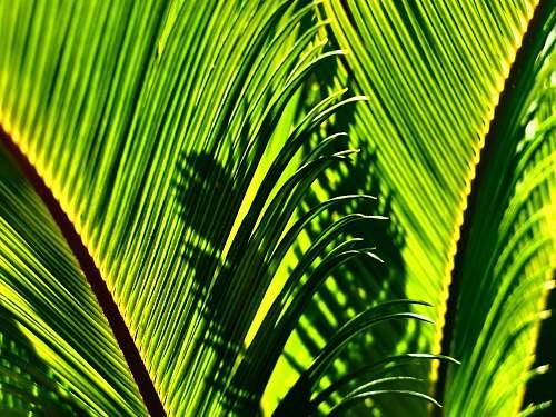 leaf green leaves plant