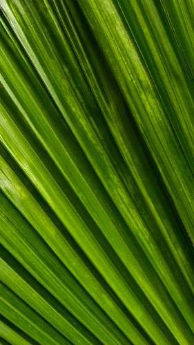leaf green line wallpaper plant