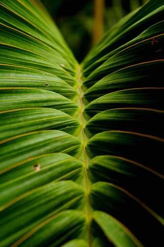 leaf green linear leaf plant plant