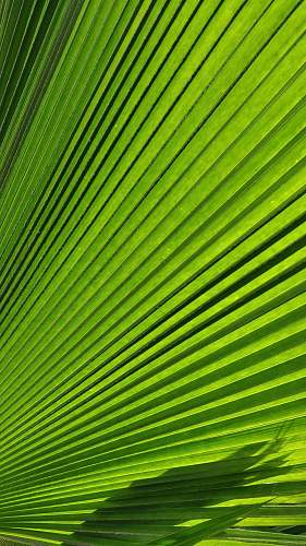 plant macro photography of green palm leaf texture