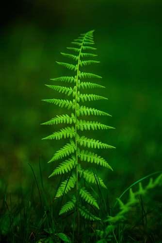 plant selective focus fern plant fern