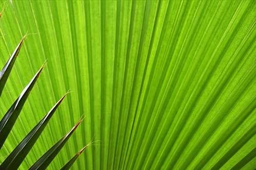 plant green fan palm plant leaf green