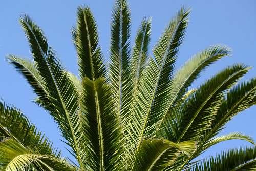 plant green fern under blue sky green