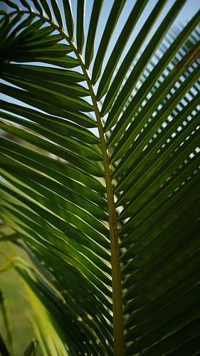 plant green palm leaf during daytime green