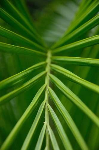plant green palm leaf green