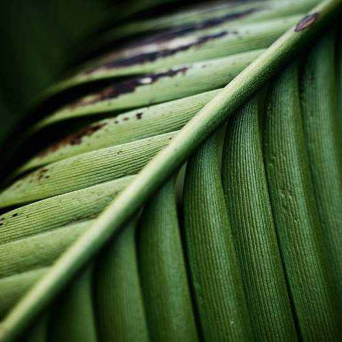 plant macro photography of green leaf green