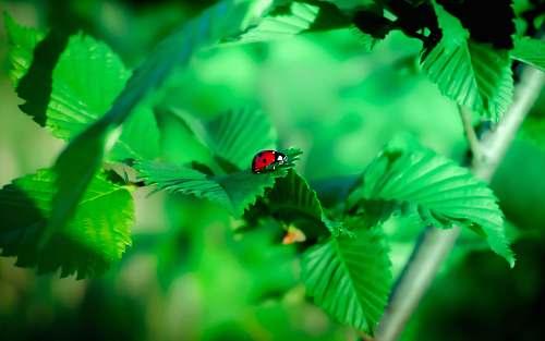 green red and black ladybug on plant vegetation