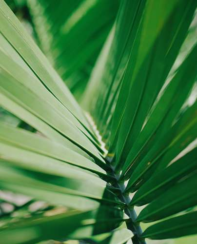 plant selective focus photo of green coconut leaf green