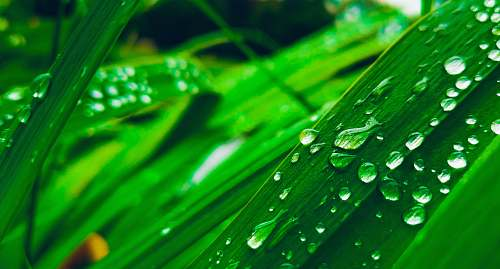 plant water dew on leaves green