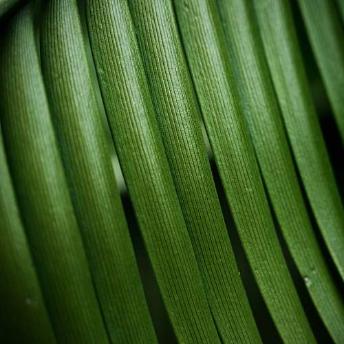 green close-up photo of green leaf veins