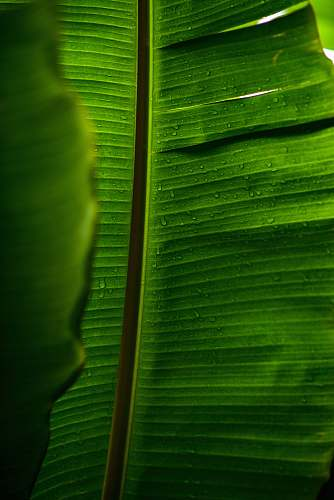 green green banana leaves book