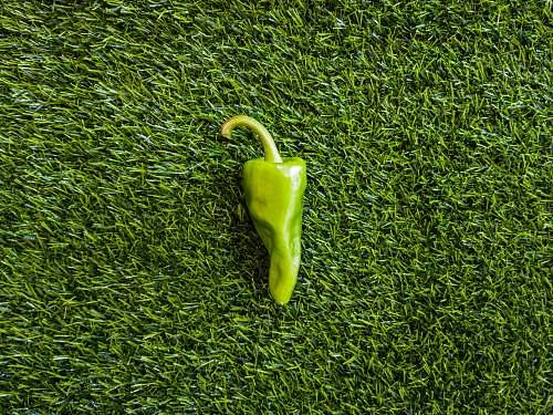green green bell pepper on green grass grass