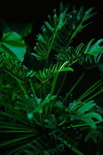 green green-leafed plant jar