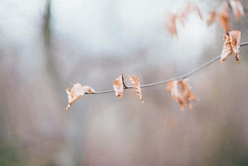 bird selective focus photography of orange-white leafed plant autumn