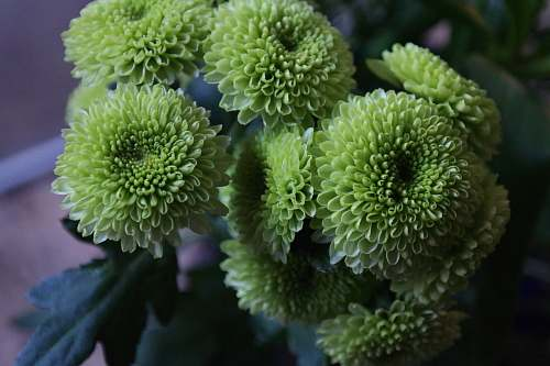 plant green petaled flowers photography green