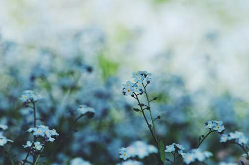 blue selective focus photography of white petaled flowers in bloom nature