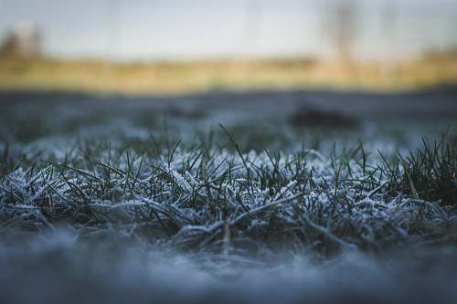 ice snow covered grass plant selective focal photo frost