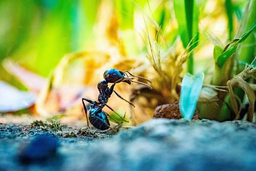 person close up photo of black ant in front of plant people