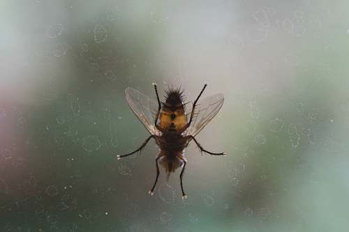 animal close up photo of black and brown fly on glass window