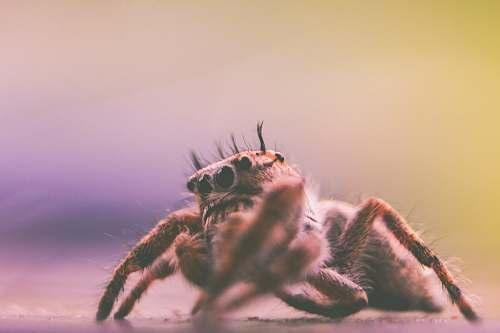 spider depth of field photography of spider arachnid