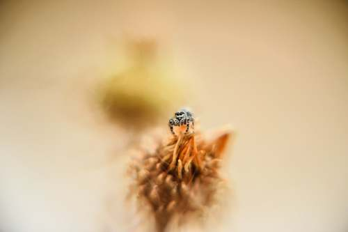 spider selective focus photo of bee perched on flower macro