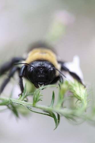 macro tilt shift lens photography of bee bee
